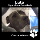imagem de Imagem de Luto contra a crueldade com animais – Pitbull Chorando