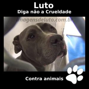 Imagem de Luto contra a crueldade com animais – Pitbull Chorando 300x300